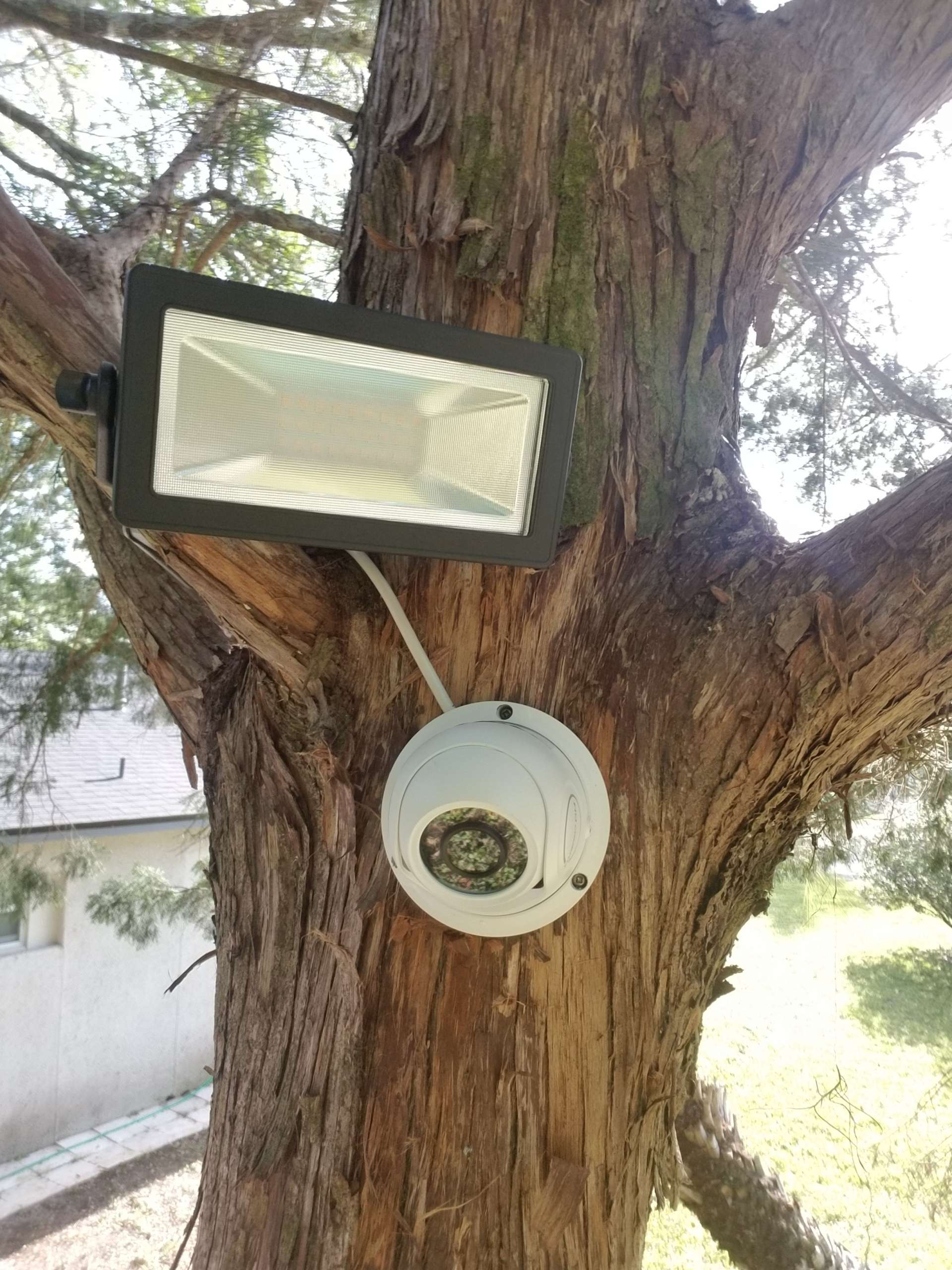 on tree security cameras